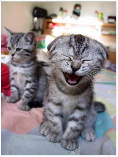 cute_kittens_is_yawning