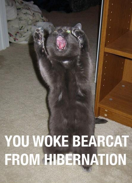 woke_bearcat_from_hibernation