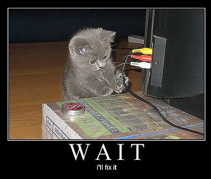 funny-cat-engineer